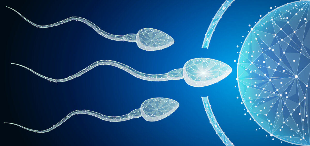 fertility drug therapy Human Egg Cell Fertilization with Sperm Cells Inside of Uterus. web design element. In the form of a starry sky or space. abstract polygonal image mash line and point. Digital graphics illustration For Poster, Cover, Label, Sticker, Business Card.